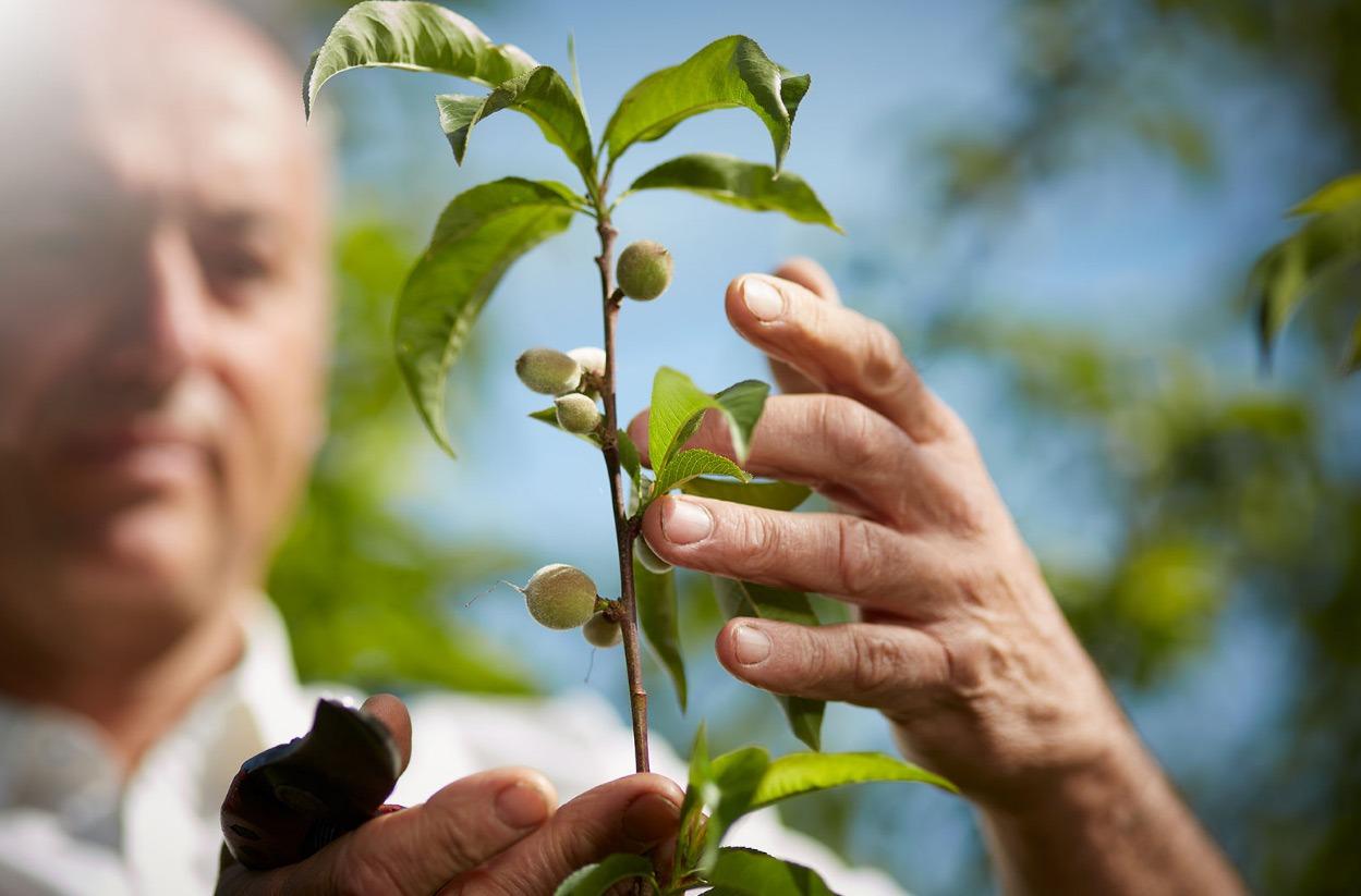 arbres fruitiers agronomie